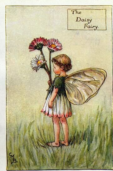 Daisy fairy Where did daisies originate