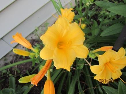 Garden 049